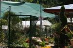 Мрежа срещу слънце за оранжерии - 30%, зелен цвят