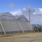 Земеделска мрежа срещу оранжерийна белокрилка