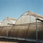 Мрежа за защита на растения от тютюнев трипс