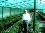 Защитна мрежа срещу слънце за оранжерии