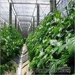 Защитна мрежа против слънце за оранжерии