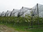 Мрежа против градушки за плодови дървета