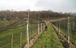 Мрежа за предпазване от градушка на плодни дървета