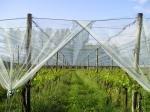 Мрежи против градушки за овошки